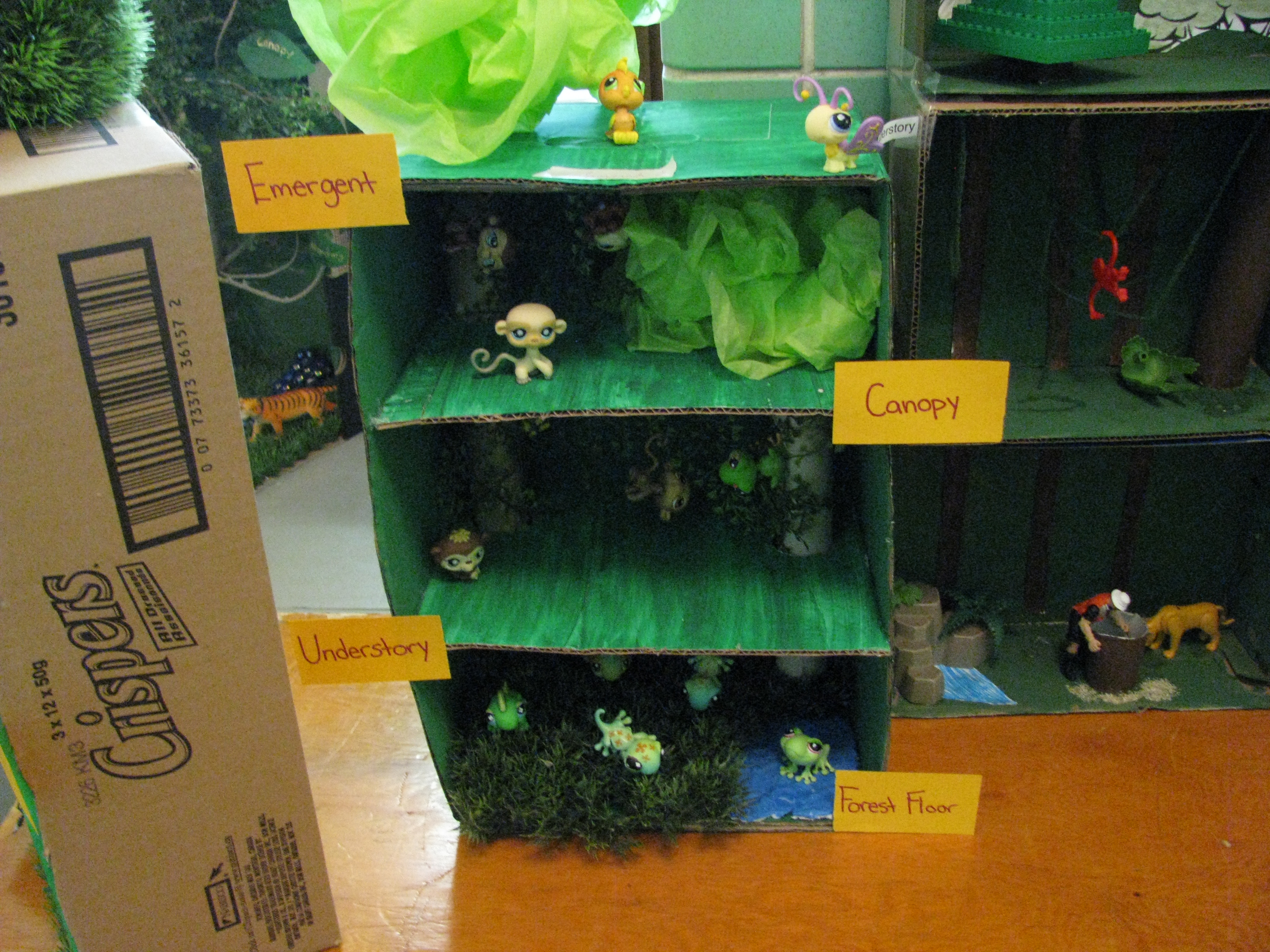 Grade Seven Tropical Rain Forests | Immaculate Heart of Mary