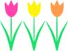 tulips3.5